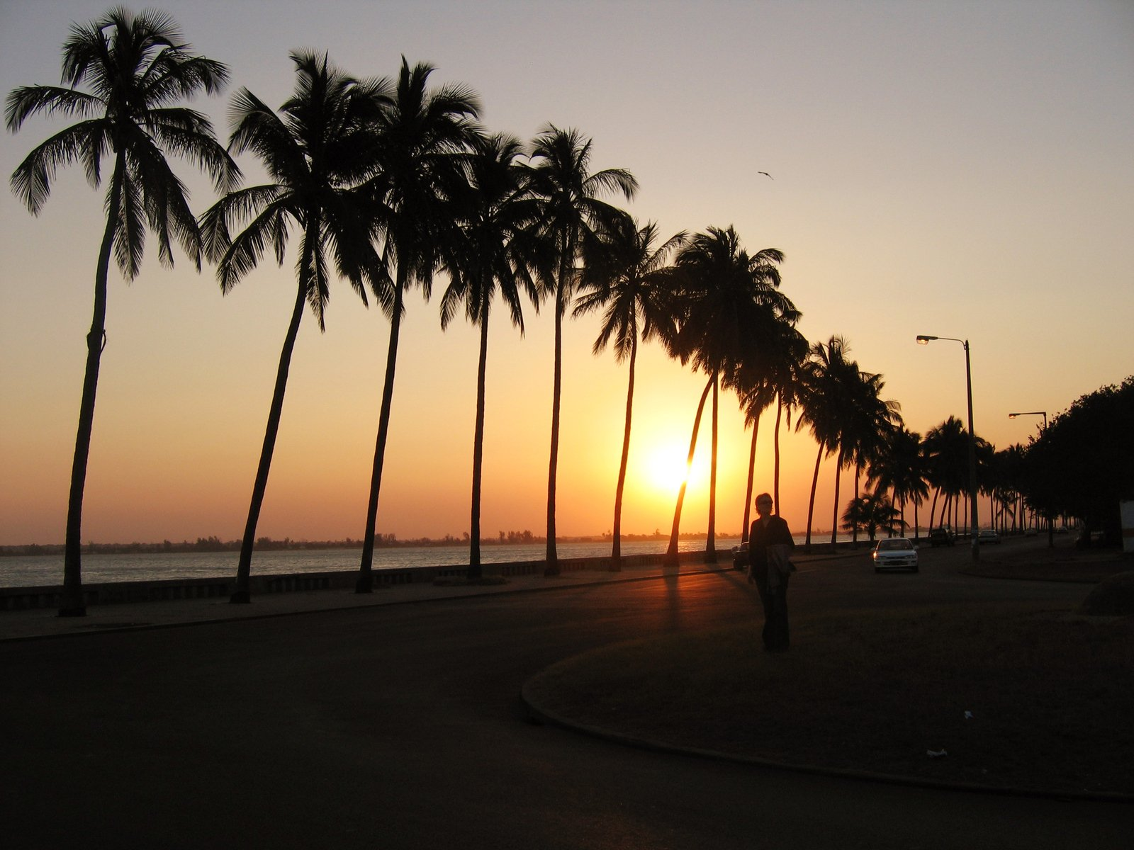 Palm trees along a street in Maputo at sunset